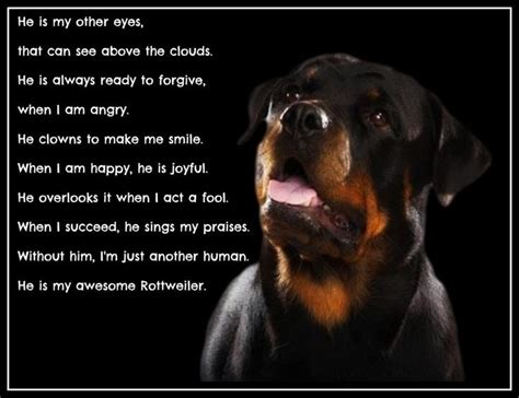 rottweiler varieties rottweilers quotes like success