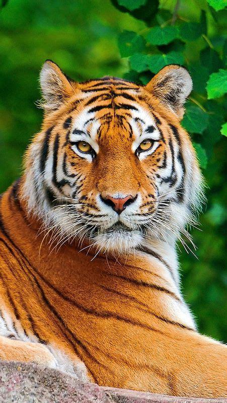 imagenes animales peligrosos animales salvajes caracter 237 sticas fotos y documentales