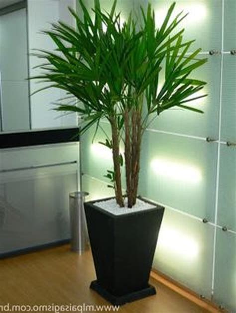 plants that do well in low light low light indoor plants 100 low light plants plant low
