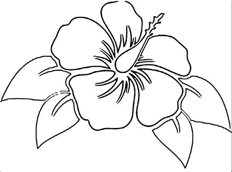 printable pictures of real flowers hibiscus flower drawing parts hibiscus coloring pages