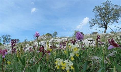 fiori simili ai rododendri fioriture di stagione dall olanda alle azzorre le pi 249