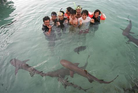 baby shark jawa swimming with sharks editorial stock photo image of
