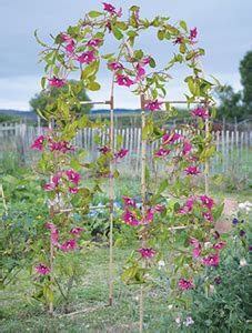 best climbing plants for arches june how to grow arches and pergolas