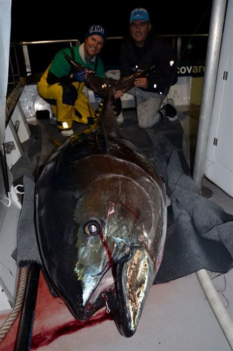 stick a fork in whole foods infowars alex jones 17 best images about bluefin tuna fishing pics on