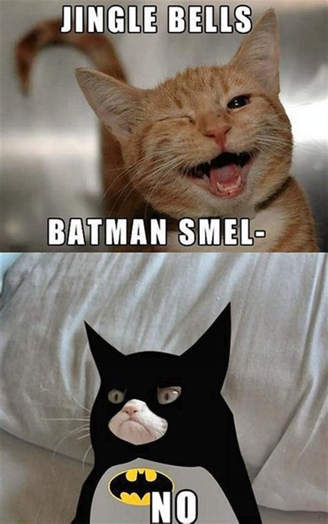 Cute No Meme - grumpy batman cat grumpy cat know your meme