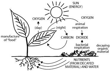 Food Factories Www Legacyproject Org Photosynthesis Coloring Pages