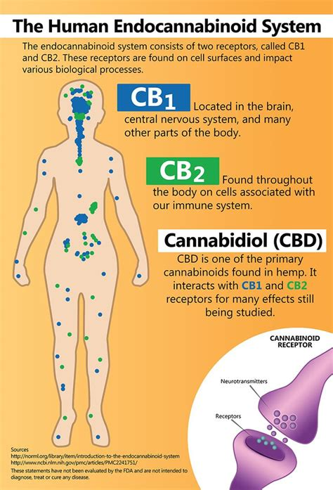 hemp cbd a primer on cannabinoids and cannabis medicine for better health books 17 best ideas about endocannabinoid system on