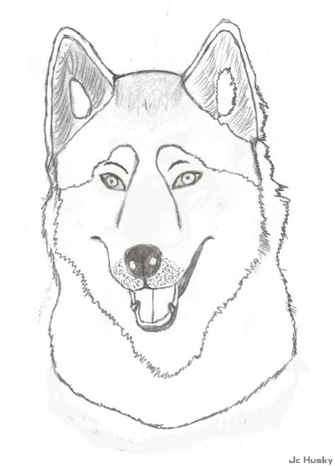 siberian husky coloring book stress relief coloring book for grown ups animal coloring book books husky sketch by jchusky26 on deviantart