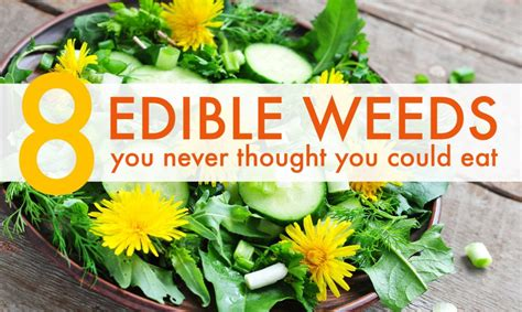 8 common weeds you never thought you could eat   Inhabitat