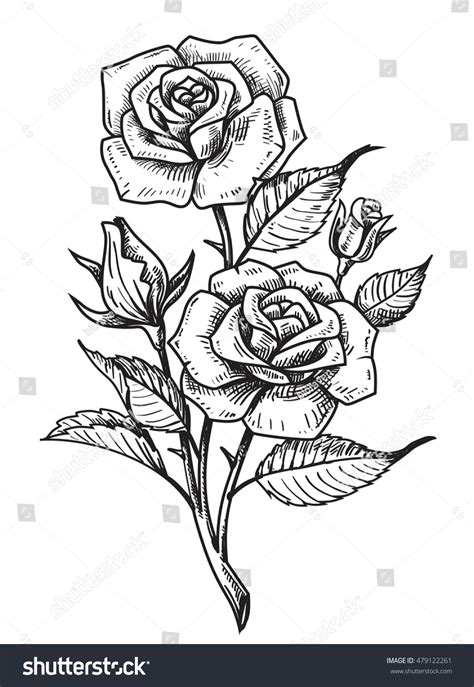 vector tattoo roses leaves on white stock vector 479122261