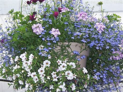 Gardening Forums by Hanging Basket Garden Gardening Forums