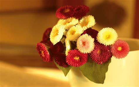 wallpaper flower com bookey flower images and wallpapers download