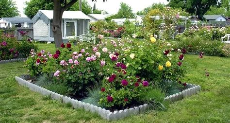 Backyard Layout Plans by Small Garden Design With Roses Wilson Garden