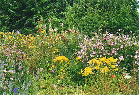 garten gestalten wildblumen naturgarten yasiflor gartenbau