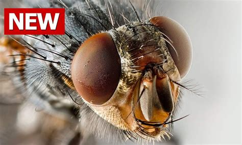 kill house flies how to get rid of flies how to get rid of house flies