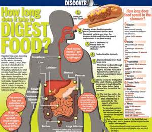 how does it take food to digest infocus247