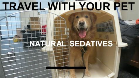 sedative for travel sedating a pet for air travel lifehacked1st
