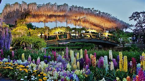 ashikaga flower park 15 most photogenic places in the world you must visit
