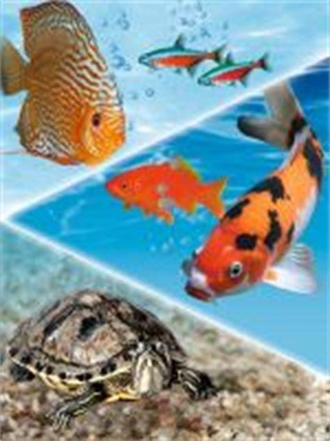 koi tattoo price range koi fish tattoo price range