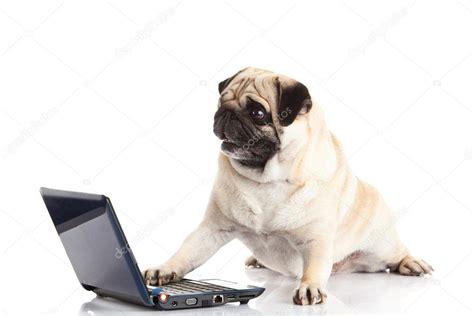 pug computer pug computer isolated on white background stock photo 169 nemez210769 35292115