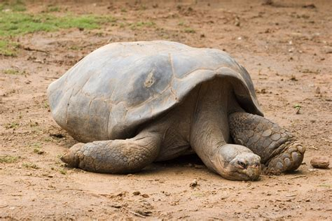 Sleepy Turtle sleepy tortoise by crumpstock on deviantart