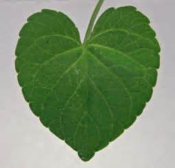heart shaped leaf by chop stock on deviantart