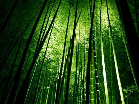 imagenes bambu japones somos uno s 243 lo quot bamb 250 un aliado contra el calentamiento