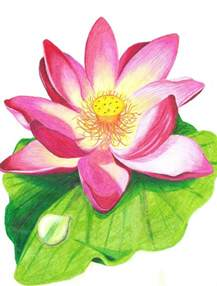 Lotus Flower Colour Lotus Flower With Colored Pencil Drawing By