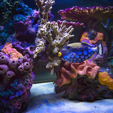 types of aquarium types of aquariums features and benefits infinity
