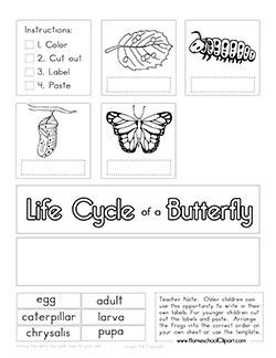 butterfly life cycle coloring sheet homeschool free life cycle of a butterfly cut paste worksheet