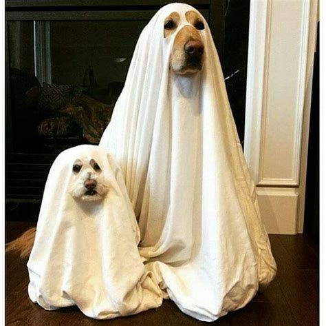 ghost costume for dogs 261 best dogs in costume clothes images on clothes costume and dogs