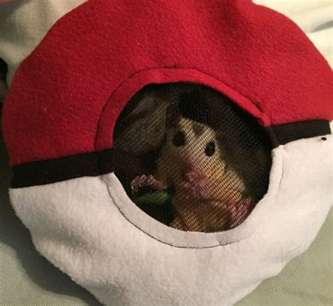 Donut Pouch Sugar Glider 374 best pets images on rats ferrets and ferret cage