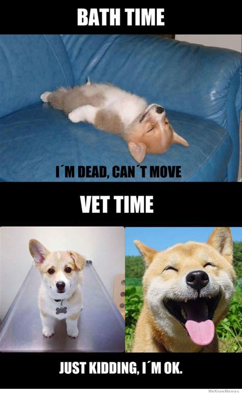 Dog Vet Meme - bath time or vet time what breed is it