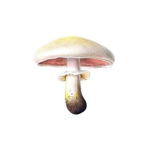 mushroom home decor mushroom liked on polyvore featuring mushrooms plants