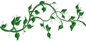 vine with maple like leaves drawing google zoeken