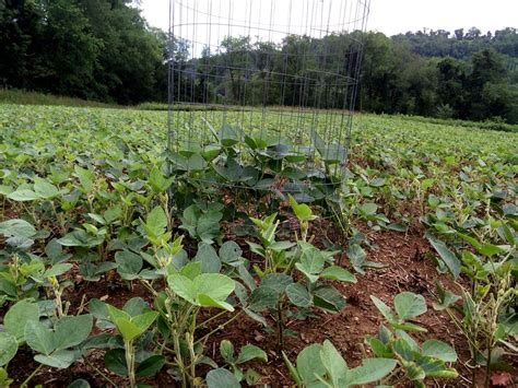 Wildlife Food Plot Planters by Food Plots For Deer And Turkey Simple Easy And Effective Food Plots Bone Collector