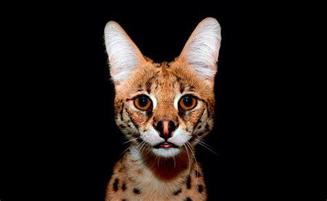 imagenes animales nocturnos animales nocturnos m 225 s tiernos del mundo
