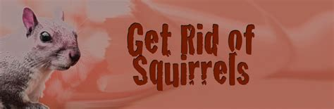 how to get rid of squirrels in the backyard get rid of squirrels the survival gardener