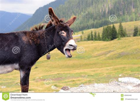 How To Design A House Plan by Funny Donkey Laughing Stock Photo Image 43645440