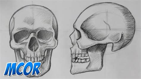 imagenes de calaveras humanas como dibujar el craneo de frente y perfil anatomia youtube
