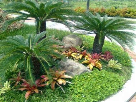 ciri tanaman sikas urban garden