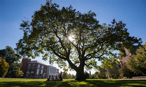 College Trees - honored with tree cus usa recognition