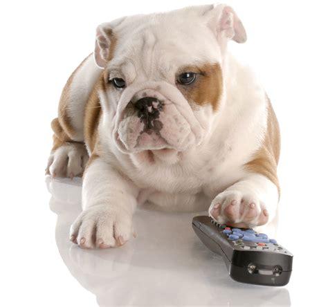 do dogs tv do dogs really tv doggies