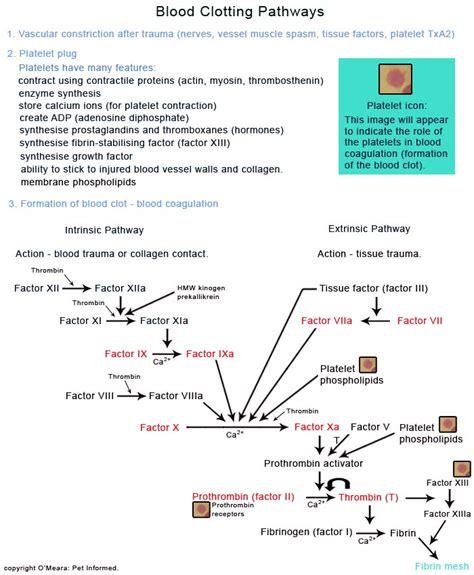 blood clotting mechanism diagram jatemplaskey clotting pathway diagram