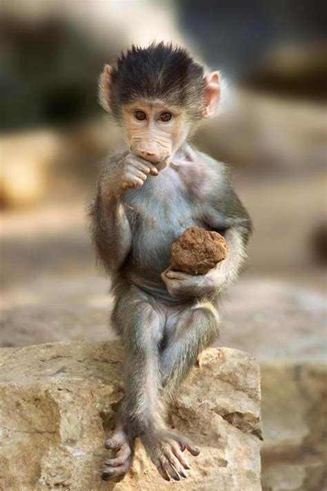 cute  adorable baby monkey pictures