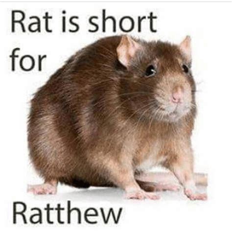 What Is Meme Short For - rat is short for ratthew dank meme on me me