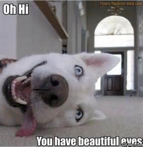 Hi Meme - funny dogs