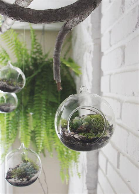 diy succulent diy hanging succulent terrarium needles leaves