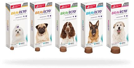 bravecto for dogs flea tick treatment for dogs bravecto 174 fluralaner