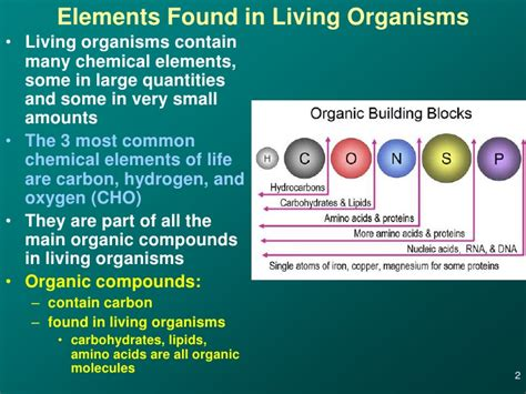2 carbohydrates in living organisms 06 macromolecule construction and carbs
